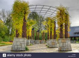 climbing plants on pergola in the fall at the park stock photo