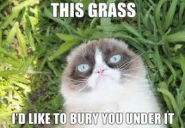 Grumpy Cat Photo 1 Best - grumpy cat memes collection funny cool angry