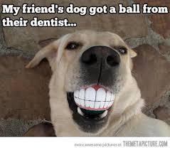 Annoyed Dog Meme - dogs meme my day