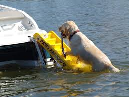 amazon com paws aboard doggy boat ladder and ramp hunting dog