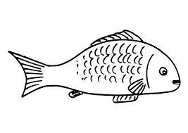 kleurplaat vis kleurplaten allerlei pinterest tropical fish