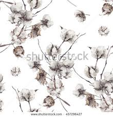 cotton flowers cotton flower stock images royalty free images vectors