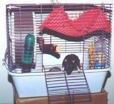 Best Bedding For Rats The Rat Report