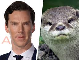 Cumberbatch Otter Meme - 19 animals that look like benedict cumberbatch