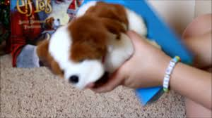 on the shelf pets opening bernard pet on the shelf tradition