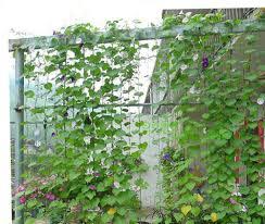 aliexpress com buy durable nylon trellis net garden netting