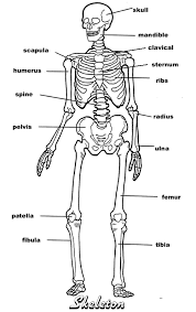 muscle archives page 19 of 36 human anatomy chart