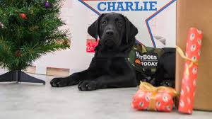 best holiday gifts for your dog today com