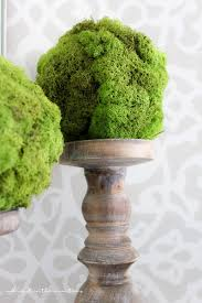 Eugenia Topiary 100 3 Ball Topiary I Love You More Than Carrots D I Y Boxwood