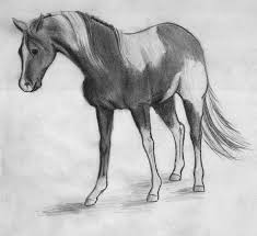 paint horse sketches u2013 images free download