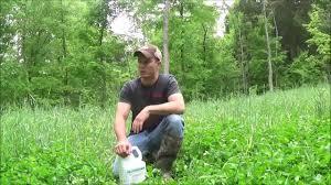 deer food plots planting with your basic yard tools poor man