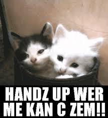 Funny Kitten Meme - hilarious kitten pictures pets wallpapers