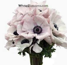 anemones flowers bulk light pink anemone flowers