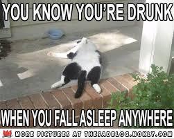 Drunk Cat Meme - 20 best cat memes thesadblog nokly com images on pinterest