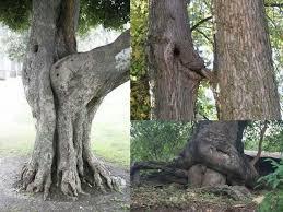 Tree Trunks Meme - 41 best memes images on pinterest funny pics funny stuff and