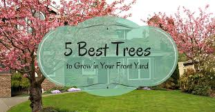 ideas front yard trees how much should it cost to remove 5