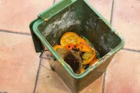 ungeziefer küche ungeziefer und maden im biomüll hausmittel gegen schädlinge in