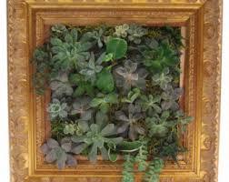 variegated u0026 green hoya hindu wall garden mount or sit