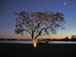 tree lighting outdoor lighting perspectives