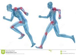 3d Human Anatomy 3d Human Man Pain Anatomy Isolated Stock Illustration Image
