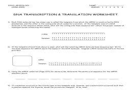dna transcription u0026 translation worksheet u2013 guillermotull com