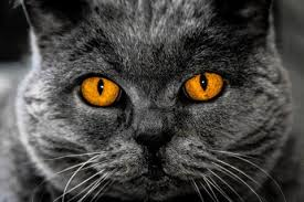 Mysterious Cat by Products U2013 Tagged