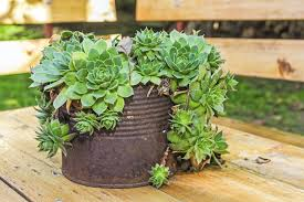 Succulent Gardens Ideas Creative Containers For Succulents Using Interesting Containers