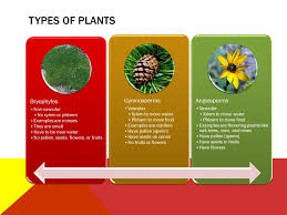 which type of plant is most closely related to flowering plants