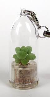 bubbly succulent live terrarium necklace plant boo boo plant