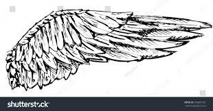 stock detailed sketch bird dove wing stock illustration 299069192