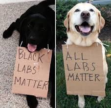 Black Lab Meme - black labs matter all labs matter dogs humor truth meme labs