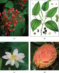 14 4 seed plants angiosperms biology libretexts