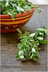 53 best the magic of marjoram images on pinterest herb gardening