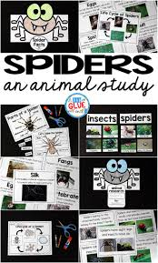 spiders an animal study a dab of glue will do