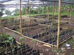 oregon native plant nursery reports on indonesian ecological restoration u0026 education