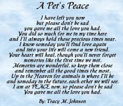 Loss Of A Child Words Of Comfort 7 Quotes That U0027ll Help You Cope With Losing Your Pet Dog People