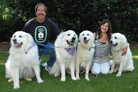 great pyrenees rescue provides wonderful dogs to good homes great pyrenees rescue of atlanta adopted pyrs pinterest dog
