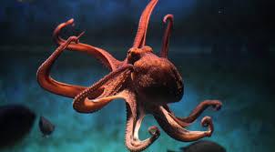 Seeking Octopus Scientific Breakthrough Octopus Dna Is Not From This World