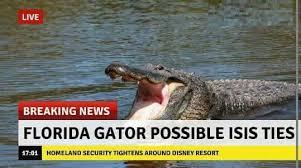 Alligator Meme - breaking news alligator affiliated with isis imgur