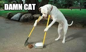 Funny Cat And Dog Memes - dang it imgflip
