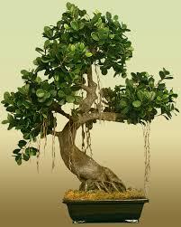 Silk Plants Direct Jade Plant Silk Trees Telesilk Com And Treesilks Silk Trees I Just Like