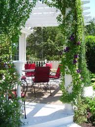 Plants For Pergola by A Wood Pergola Hgtv How Patio Plants For Privacy To Build A Wood