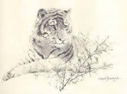david shepherd tiger drawing sketch