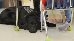 can dogs predict seizures u2014 nova next pbs
