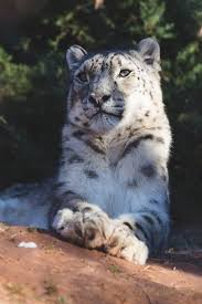 83 best zoo s all over the world images on pinterest zoos