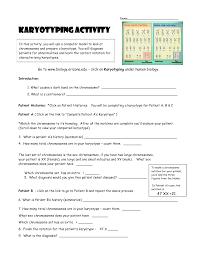 karyotyping activity doc teaching stuff pinterest activities
