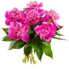 peonies delivery best seller flowers delivery germany fa103661 pink