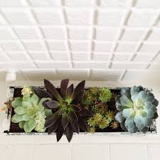 succelents how to make a diy window box garden for succulents