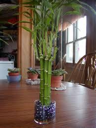 homelife top 15 indoor plants indoor plan large indoor plant pots melbourne indoor planters