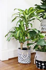 The Best Indoor Plants 58 Best Indoor Plants Images On Pinterest Indoor Plants Plants